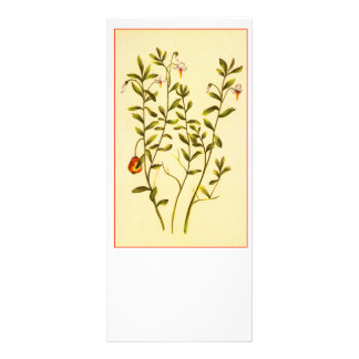 Vintage Illustration of a Cranberry Plant Personalised Rack Card