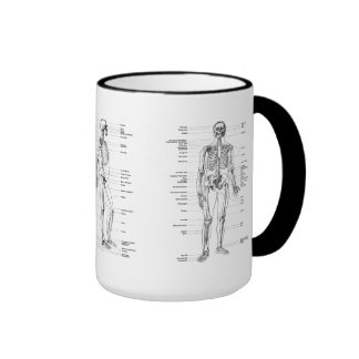Vintage - Labeled Skeleton - Front, Back & Lateral Ringer Mug