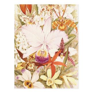Vintage Orchid Flower Blooms Pretty Floral Design Postcard