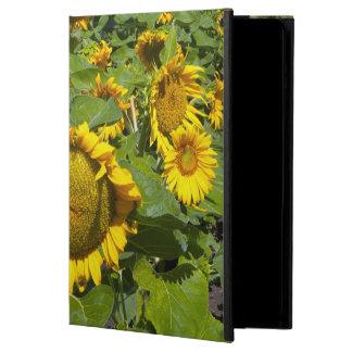 WA, Kittitas County, Sunflower Field iPad Air Covers