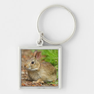 WA, Redmond, Eastern Cottontail baby rabbit Silver-Colored Square Key Ring