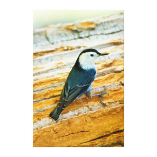 White-Breasted Nuthatch (Sitta Carolinensis) Canvas Prints