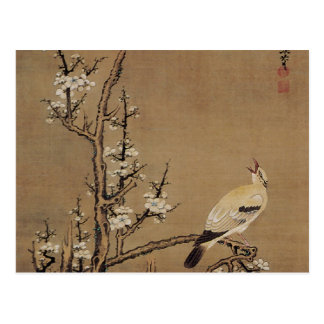 White Plum Blossoms and Yellow Birds by Kurokawa K Postcard