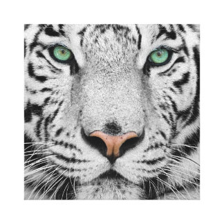White Tiger Gallery Wrapped Canvas