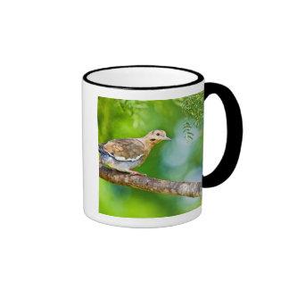 White-winged Dove Zenaida asiatica) adult, Ringer Mug