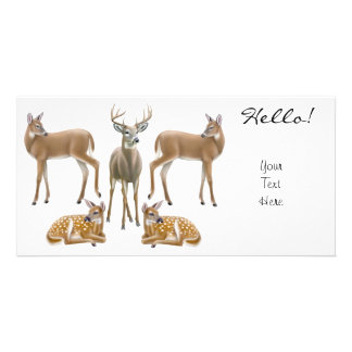 Whitetail Deer Photo Card