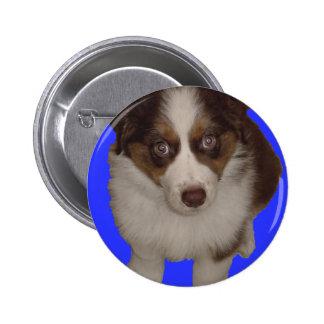 Who me? Red Tri Aussie Puppy 6 Cm Round Badge