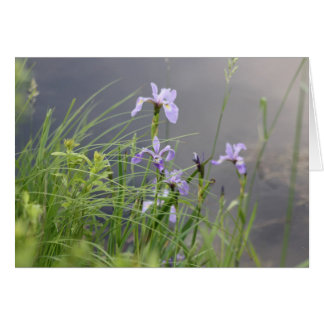 Wild Arctic Iris Note Card