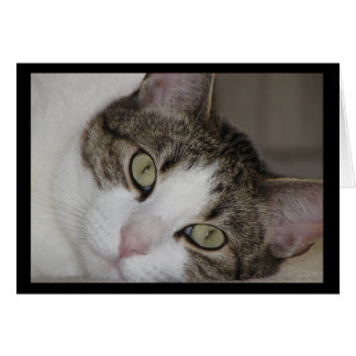 Wistful Cat Missing You Greeting Card