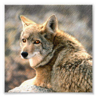 Wolf Rain Graphic Art Photo Art
