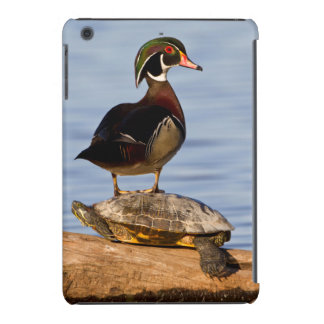 Wood Duck male standing on Red-eared Slider iPad Mini Retina Case