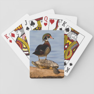 Wood Duck male standing on Red-eared Slider Playing Cards