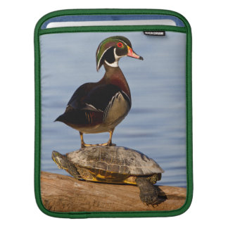 Wood Duck male standing on Red-eared Slider Sleeves For iPads