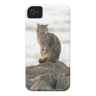 Yawning Cat on the Rocks Blackberry Bold Case