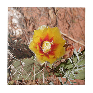 Yellow and red cactus flower in bloom small square tile