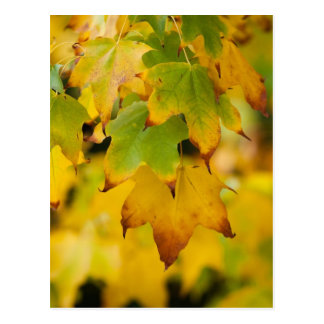Yellow Autumn Postcard