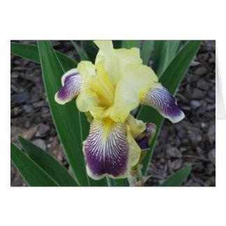 Yellow Iris Note Card