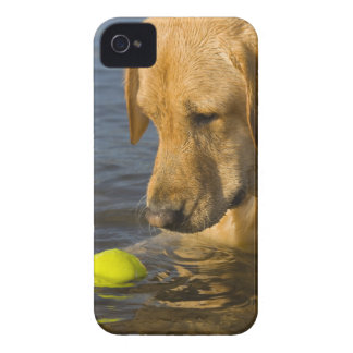 Yellow labrador with a tennis ball in the water iPhone 4 Case-Mate cases