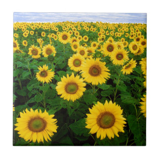 Yellow Sunflowers Small Square Tile
