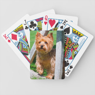 Yorkshire Terrier standing in a wagon wheel Card Deck