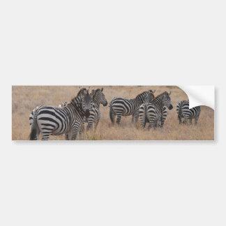Zebra in Kenya Bumper Sticker